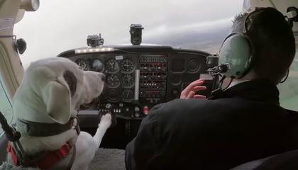 British TV Show Asks If Dogs Can Fly Airplanes and...Yes, They Can