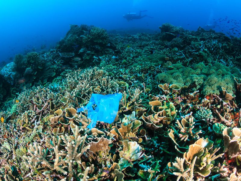 Ocean plastic waste is making coral reefs vulnerable to disease
