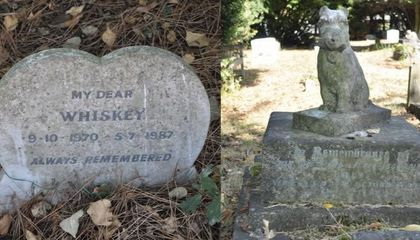 Pet Cemeteries Reveal Evolution of Humans' Relationships With Furry Friends