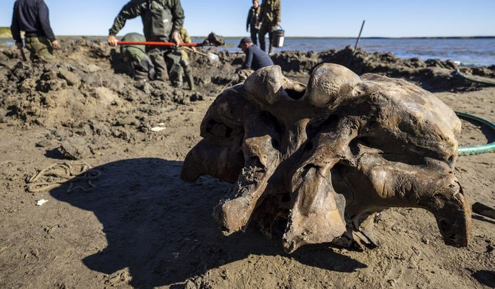 Mammoth Foot With Ligaments Found In Siberia