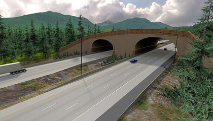 New Animal Overpass Is Already Protecting Critters in Washington State