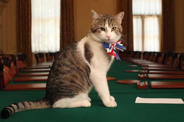 "10 Downing Street's ""Chief Mouser"" Is Keeping His Job"
