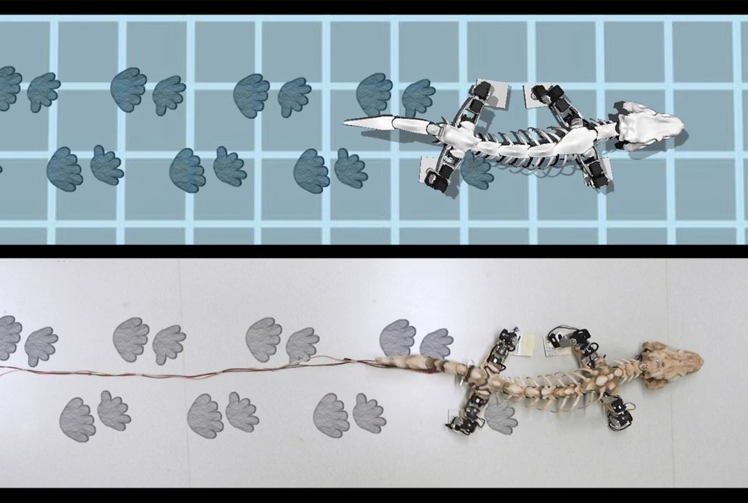 Robot recreates the walk of a 290-million-year-old creature