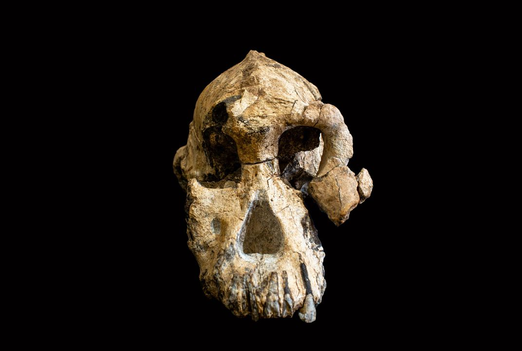 A 3.8-Million-Year-Old Skull Puts a New Face on a Little-Known Human Ancestor