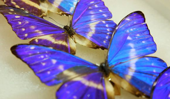 Preview thumbnail for video'How Butterfly Wings Inspire Innovation