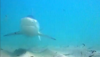 Thousands of Blacktip Sharks Are Hanging Out on Florida's Coast Right Now