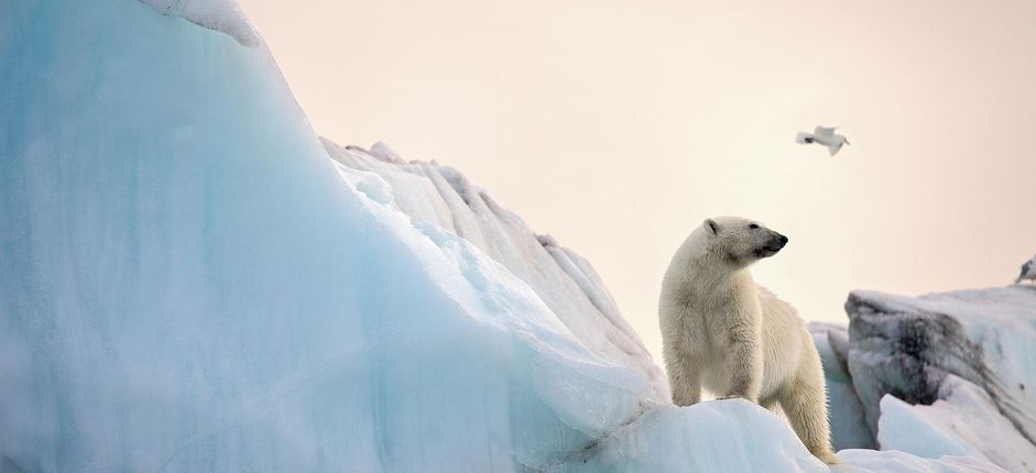 An Arctic Cruise of Norway's Svalbard Experience a strikingly beautiful wilderness known only to the adventurous few