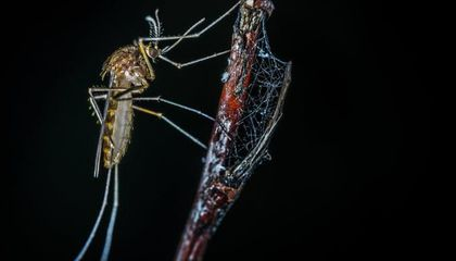 Why Some Summers Are So Appealing For Mosquitoes
