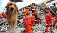 Ask Smithsonian: Can Animals Predict Earthquakes?