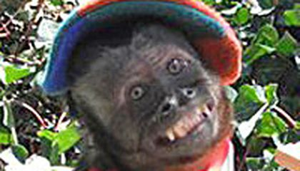 Image: Monkey is top dog among animal actors