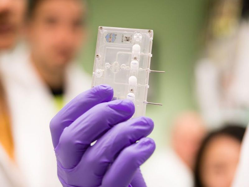 How Putting Organs On Chips Could Revolutionize Medicine Science