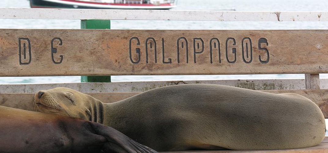 Sea Lions resting in the Galápagos Islands