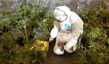 This Deadly Plant Virus Attracts Bees