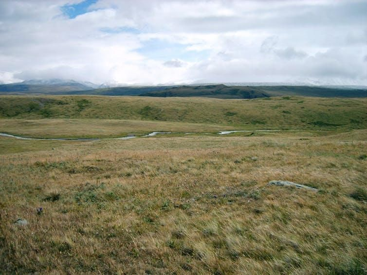 Ukok Plateau, Siberia, is one of the last remnants of the mammoth steppe.