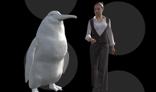 A Human-Sized Penguin Once Waddled Through New Zealand