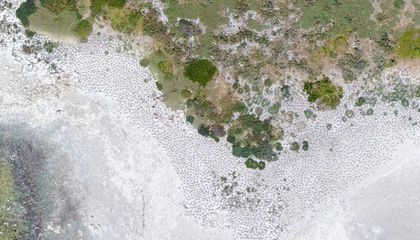 When It Comes to Counting Wildlife, Drones Are More Accurate Than People