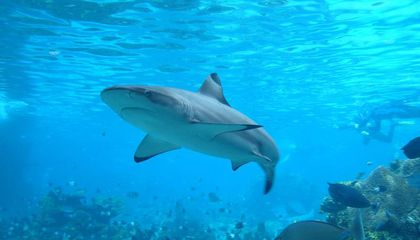 Do Shark Repellents Really Work?