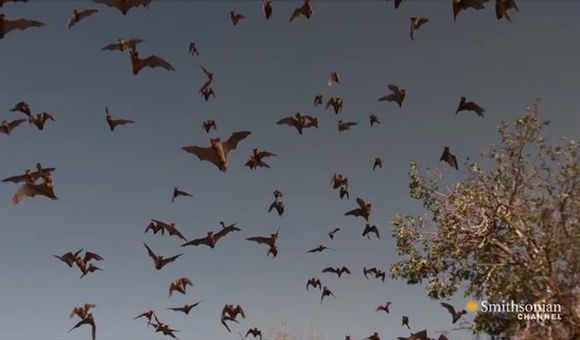 Preview thumbnail for video'Tracking Bat Colonies With High-Speed Cameras