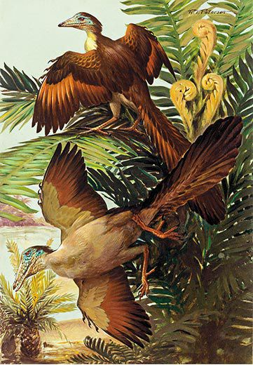National Geographic Magazine Portrayed Dino Birds In This Way 1999 And Presented Them To The Whole World As Evidence Of Evolution
