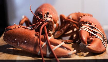 Maine Brewers Are Selling Lobster-Infused Beer