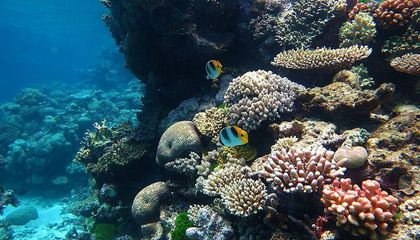 healthy coral reef under clear blue water