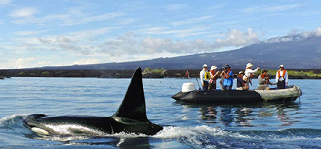 Enjoy a whale watching excursion in the Galapagos