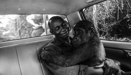 The Touching Story Behind This Award-Winning Wildlife Image