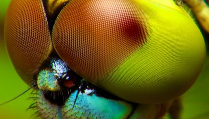 This Camera Looks at the World Through an Insect's Eyes