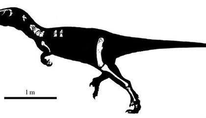 Austroraptor: a Giant, Sickle-Clawed Killer