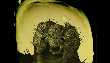 Old Time Portraits of Parasites