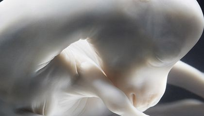 The Serene Beauty of Horses in the Womb