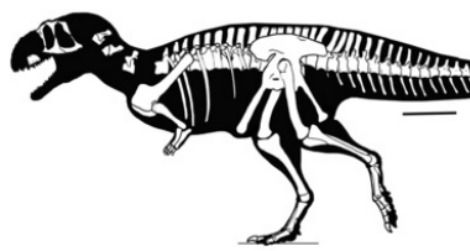A skeleton reconstruction of Eoabelisaurus, showing the recovered parts of the skeleton
