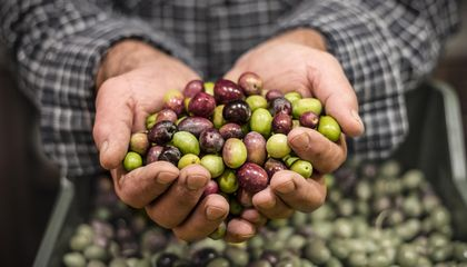 Italy May Need to Import Olive Oil After Extreme Weather Decimates Local Crops
