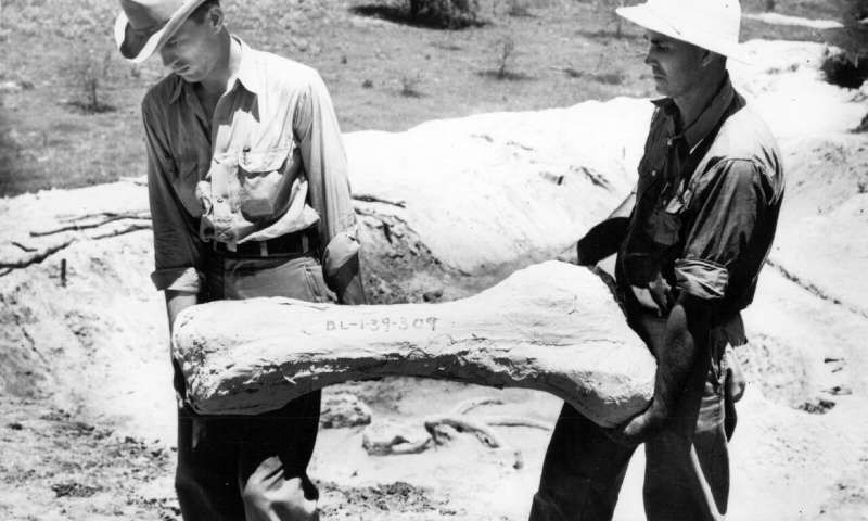 """New Analysis of Depression-Era Fossil Hunt Shows Texas Coast Was Once a """"Serengeti"""""""