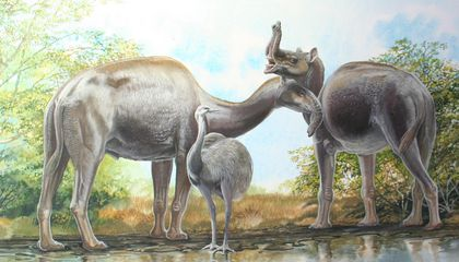 Mystery Mammals' Ancestry Was Revealed by Proteins, Not DNA
