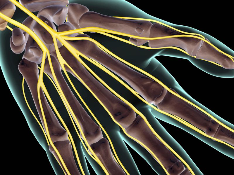 Hand and Nerves