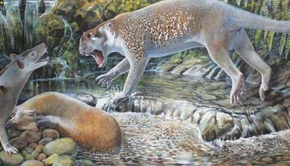 New Species of Extinct Marsupial Lion Deepens Their Fierce Family Tree
