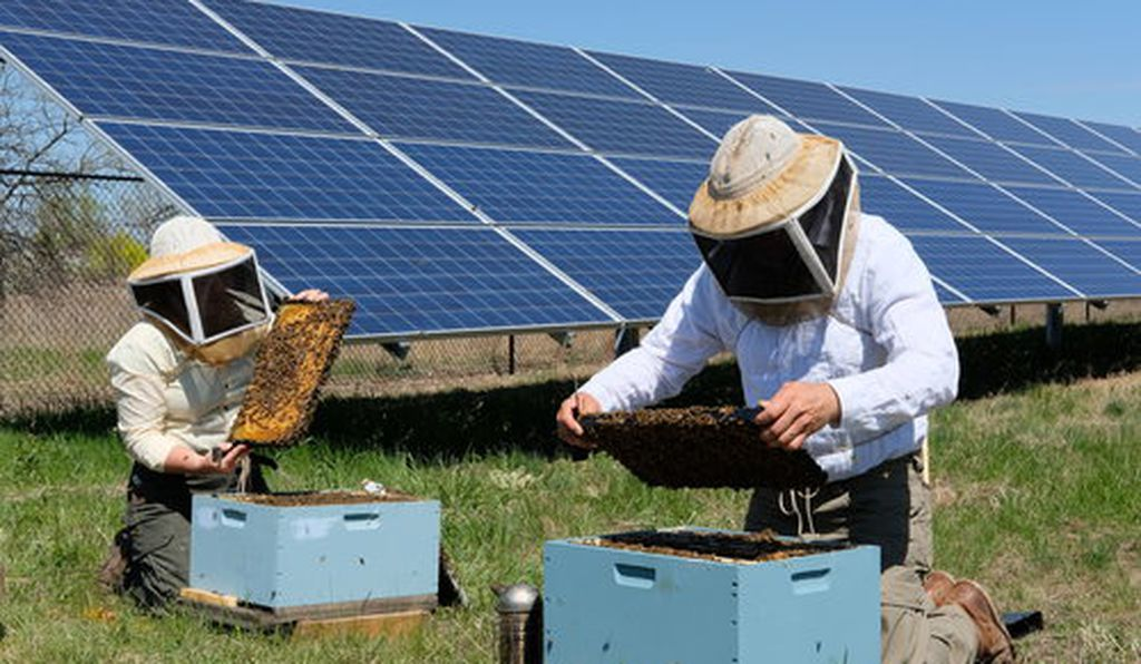 Chiara and Travis Bolton with their bees near a solar array site. Bolton Bees.