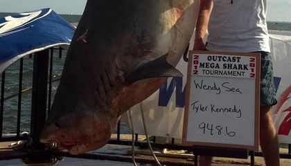 Shark Week Proves We Are Fascinated by Sharks, So Why Do We Kill So Many of Them?