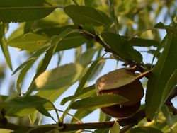 Tour an orchard and taste homemade wine image