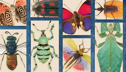 The World's Most Interesting Insects