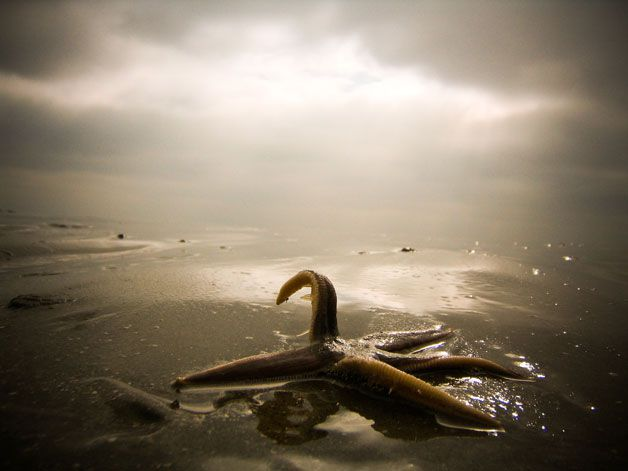 201105201041186th-photocontest-natural-starfish.jpg