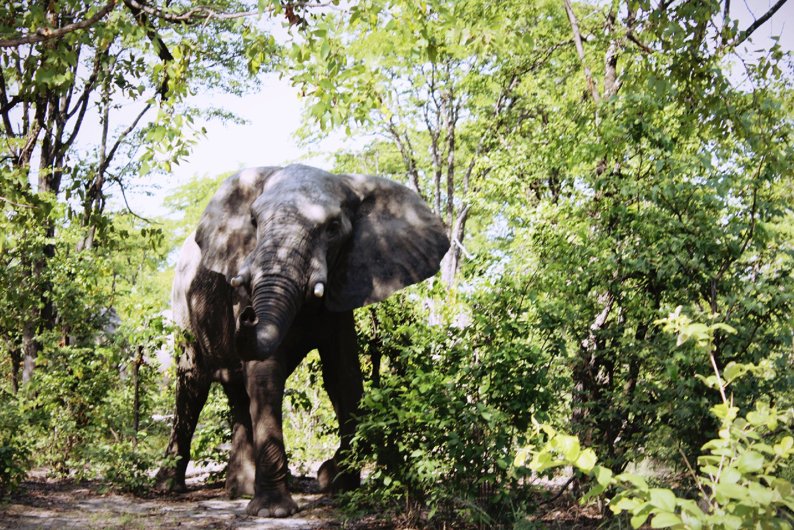 Five Things To Know About Botswana S Decision To Lift Ban On Hunting Elephants Smart News Smithsonian Magazine