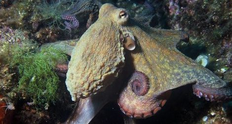 Ten Curious Facts About Octopuses | Science | Smithsonian