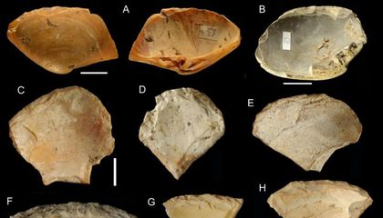 To Craft Cutting Tools, Neanderthals Dove for Clam Shells on the Ocean Floor