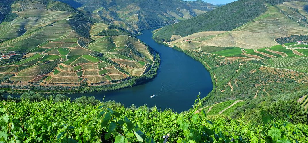 Landscape of vineyards along the Douro River