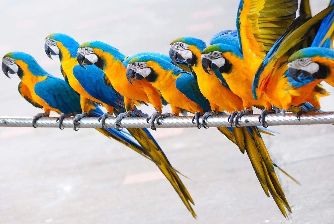 Fun Facts About Parrots Science Smithsonian - 14 hilarious differences proving men women see world two different ways 6 true