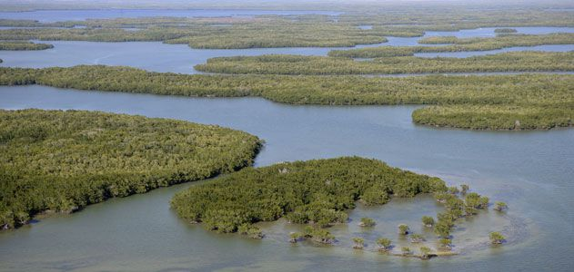 mangroves-ecocenter-631.jpg