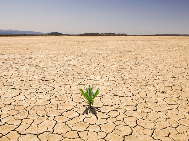 Creating Drought-Tolerant Plants By Hacking Their Natural