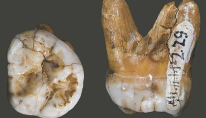 Modern Humans Once Mated with Other Species